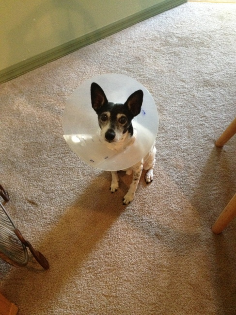 Buddy and the cone of shame